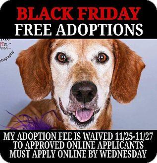 Labrador Retriever Mix Dog for adoption in Cincinnati, Ohio - Georgina- WAIVED FEE