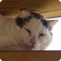 Adopt A Pet :: Bubba - New Milford, CT