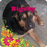 Adopt A Pet :: Rigzby - Friendswood, TX
