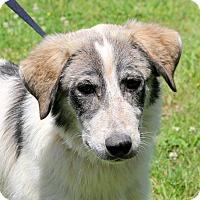 Adopt A Pet :: Boone - Glastonbury, CT