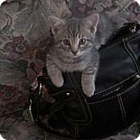 Adopt A Pet :: Camp Ground Babies - Clay, NY