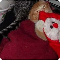 Adopt A Pet :: SONNY - Little Neck, NY