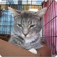 Adopt A Pet :: Elmo - Easley, SC