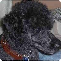 Adopt A Pet :: Freddie - Rigaud, QC
