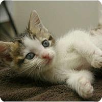 Adopt A Pet :: Thyme - Secaucus, NJ