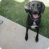 Adopt A Pet :: Lady luck - Scottsdale, AZ