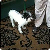 Adopt A Pet :: Magic - Miami, FL