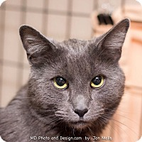 Adopt A Pet :: Fry - Fountain Hills, AZ