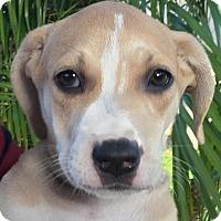 Adopt A Pet :: Grandview#6F - Orlando, FL