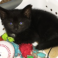 Adopt A Pet :: Poppy - N. Billerica, MA