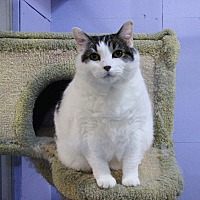 Adopt A Pet :: Princess - Mission, BC