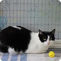 Adopt A Pet :: Liz - Covington, LA