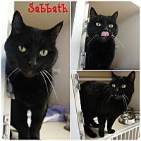 Adopt A Pet :: Sabbath - El Dorado Hills, CA