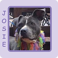 "Adopt A Pet :: JOSIE ""JOJO"" - Dallas, NC"