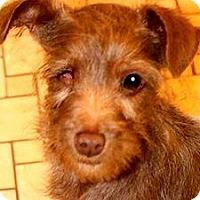 Adopt A Pet :: POPPY(OUR