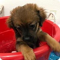 Adopt A Pet :: Tooky - Chico, CA
