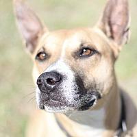 Adopt A Pet :: Tess - Fresno, CA