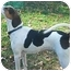 Photo 1 - Foxhound Dog for adoption in Waldorf, Maryland - Sawyer