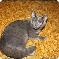 Adopt A Pet :: Pearl - Naples, FL