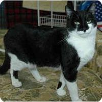 Adopt A Pet :: Tootsie - Pendleton, OR