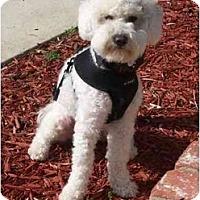 Adopt A Pet :: Higgins - La Costa, CA