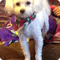 Adopt A Pet :: Biscuit - Hazard, KY