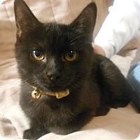Adopt A Pet :: Linus - Reston, VA