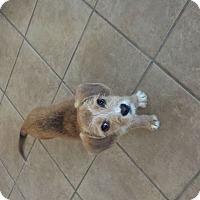 Adopt A Pet :: Pippa - Homewood, AL