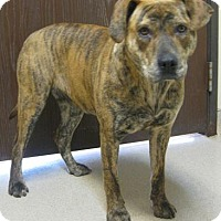Adopt A Pet :: Nala - Gary, IN