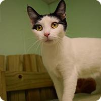 Adopt A Pet :: Sage - Canastota, NY