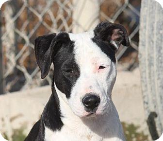 Terrier (Unknown Type, Medium) Mix Dog for adoption in Hooksett, New Hampshire - Shazam Adoption Pending!
