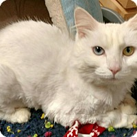 Adopt A Pet :: Powder - Powell, OH