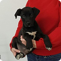Adopt A Pet :: Magic - Livingston, TX
