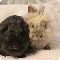 Adopt A Pet :: Coco & Chanel - Hillside, NJ