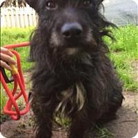 Adopt A Pet :: Lennox - Encino, CA