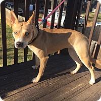 Adopt A Pet :: Zoey - Acworth, GA