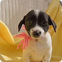 Adopt A Pet :: Lucy - Pittsburgh, PA