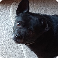 Adopt A Pet :: Lexi - Davenport, IA