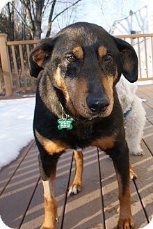 Shepherd (Unknown Type)/Doberman Pinscher Mix Dog for adoption in Rockaway, New Jersey - Carly