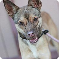 Adopt A Pet :: Hendrix - Canoga Park, CA
