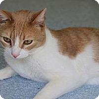 Adopt A Pet :: henry - El Cajon, CA