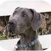 Adopt A Pet :: GABBY - Pearl River, NY