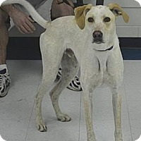Adopt A Pet :: Bernie - Windsor Heights, WV