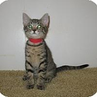 Adopt A Pet :: Carlos - Shelton, WA