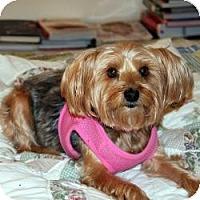Adopt A Pet :: Kelly - Hardy, VA