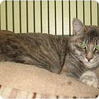 Adopt A Pet :: Tiger Lily - Shelton, WA