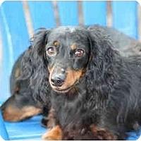 Adopt A Pet :: Jake - Ft. Myers, FL