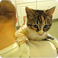 Adopt A Pet :: Tina - Warren, MI
