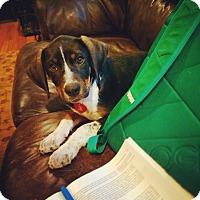 Adopt A Pet :: Forrest - Franklin, TN