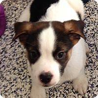 Adopt A Pet :: Jessie - Washington, PA